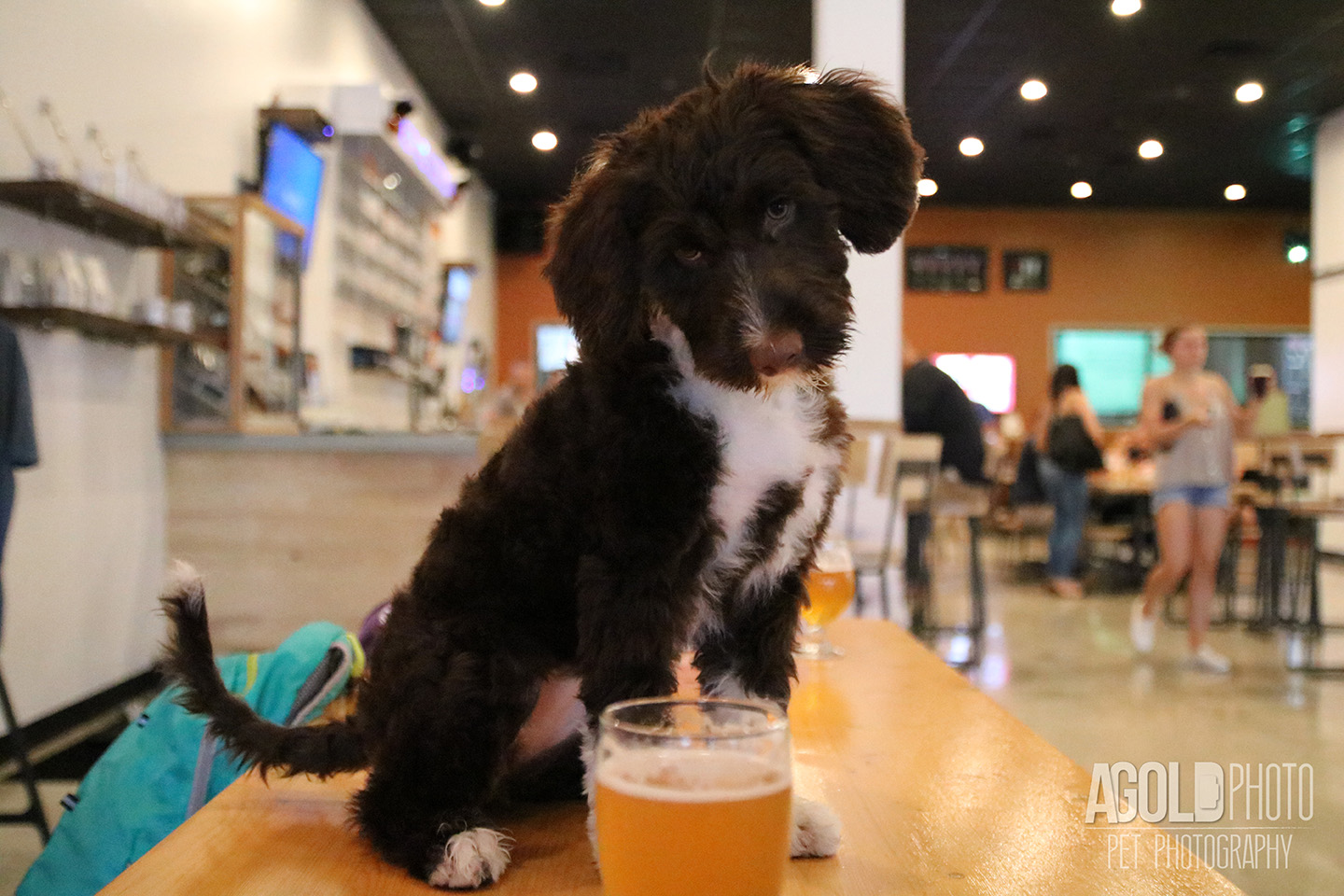 Seminole Heights Pup Crawl_AGoldPhoto Pet Photography_11