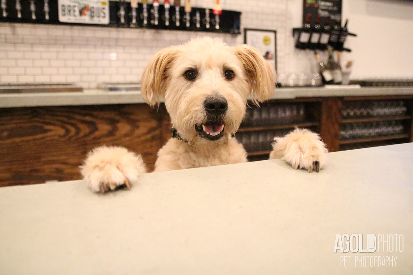 Seminole Heights Pup Crawl_AGoldPhoto Pet Photography_2