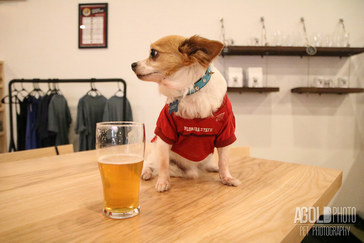 Seminole Heights Pup Crawl_AGoldPhoto Pet Photography_3