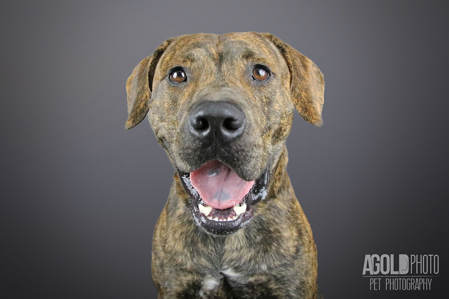 handsome_agoldphoto-tampa-pet-photography__agoldphoto-tampa-pet-photography_