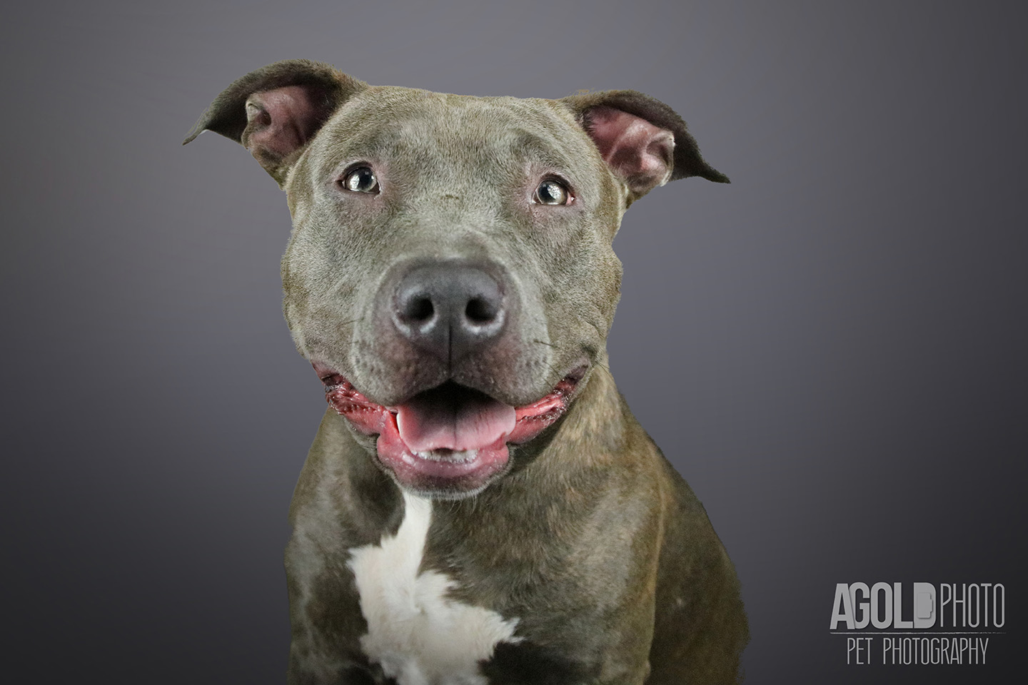 nelly_agoldphoto-tampa-pet-photography__agoldphoto-tampa-pet-photography_
