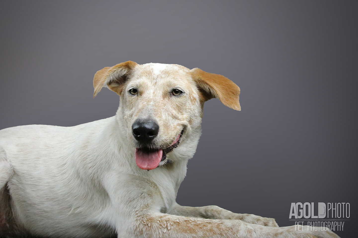 riley_agoldphoto-tampa-pet-photography__agoldphoto-tampa-pet-photography_