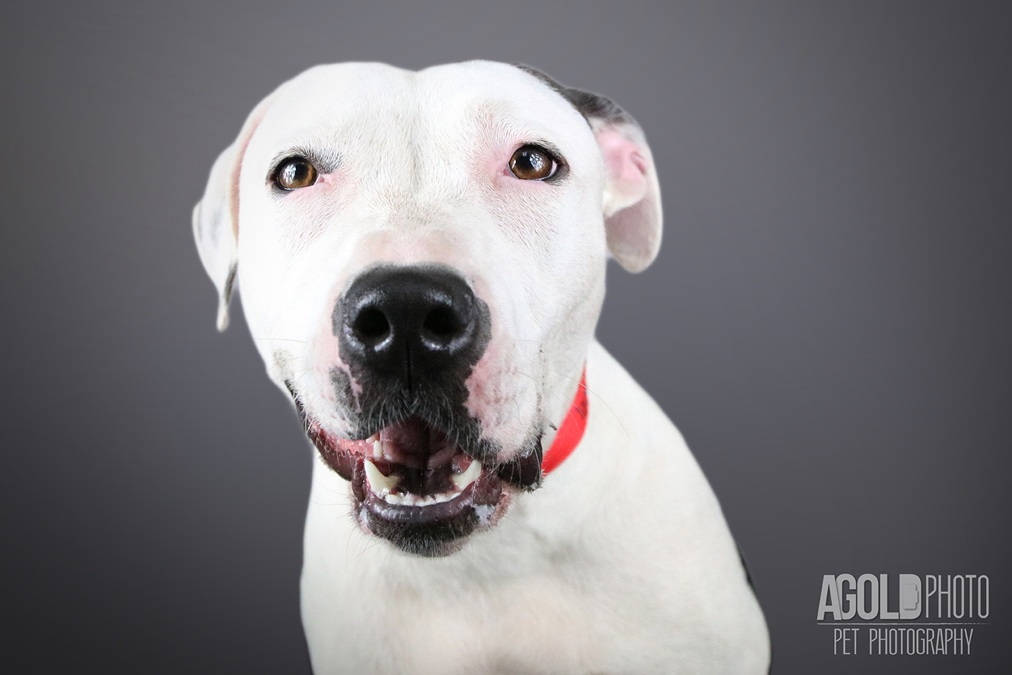 ruthie_agoldphoto-tampa-pet-photography__agoldphoto-tampa-pet-photography_