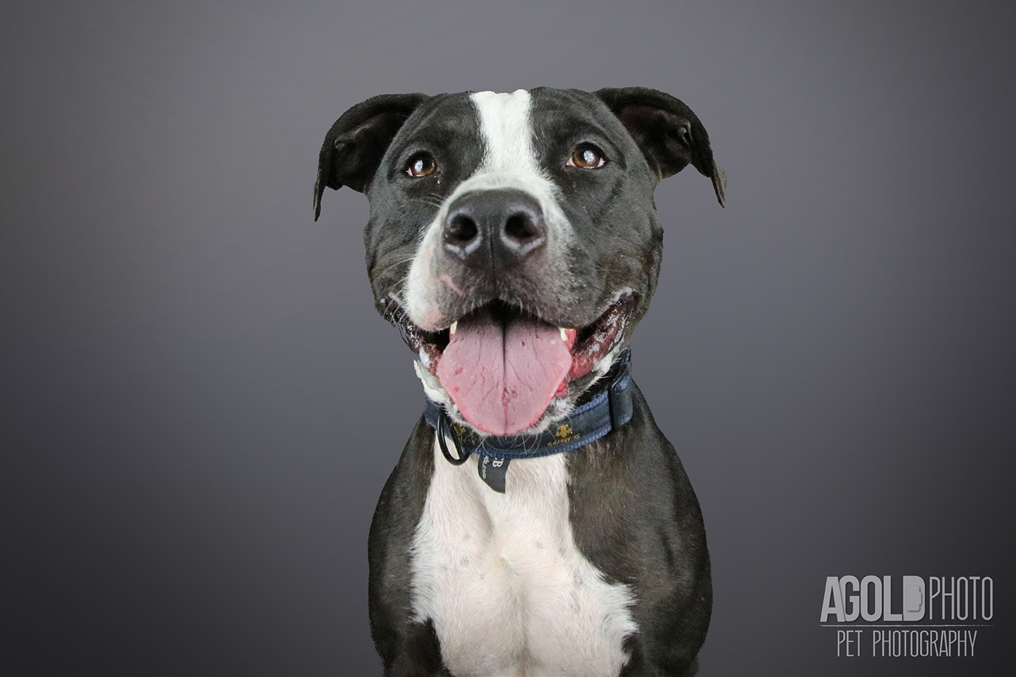 valentino_agoldphoto-tampa-pet-photography__agoldphoto-tampa-pet-photography_