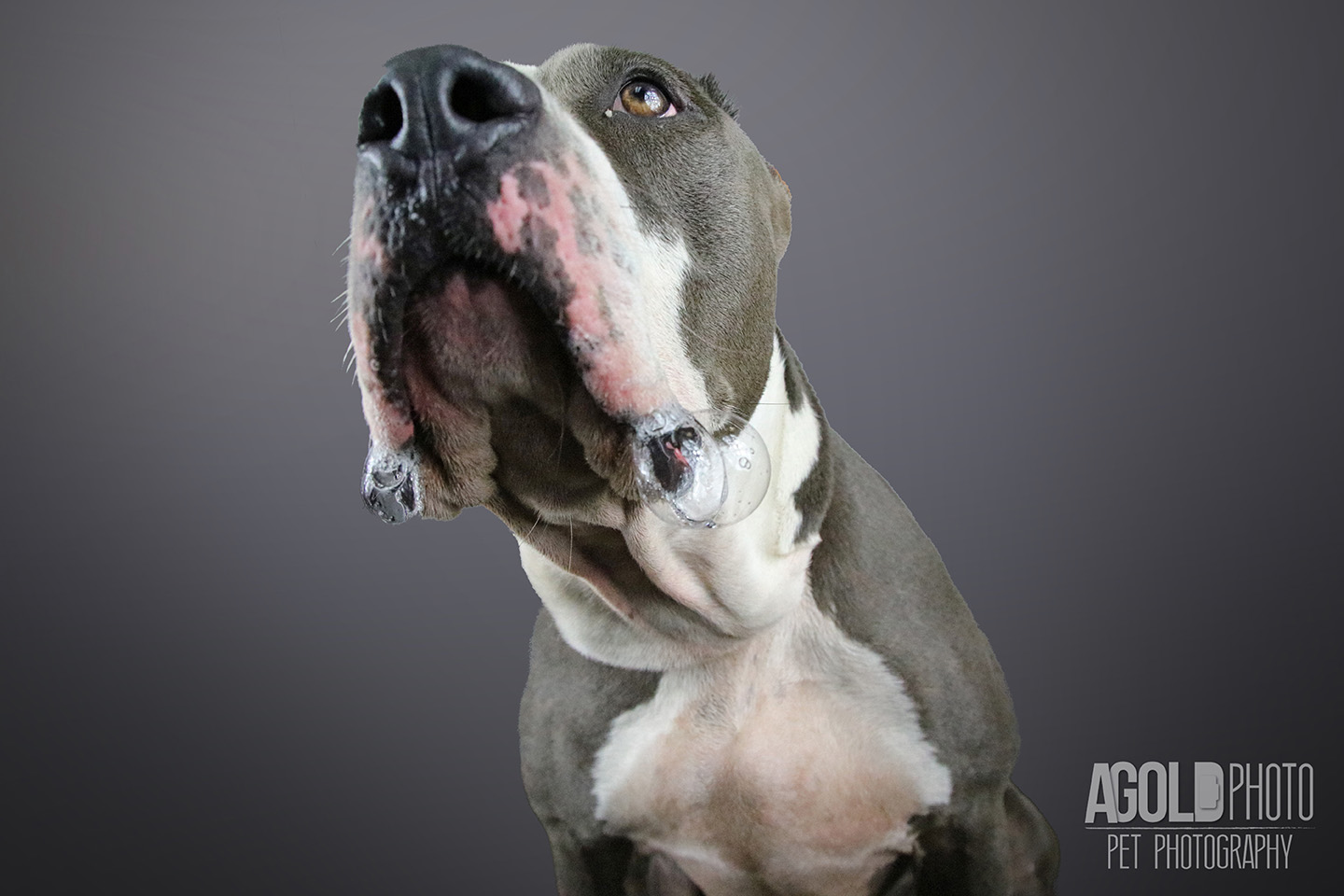 west-1_agoldphoto-tampa-pet-photography__agoldphoto-tampa-pet-photography_