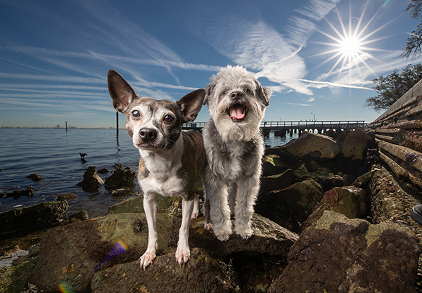 https://agoldphoto.com/services/wide-angle-pet-photo-shoot/