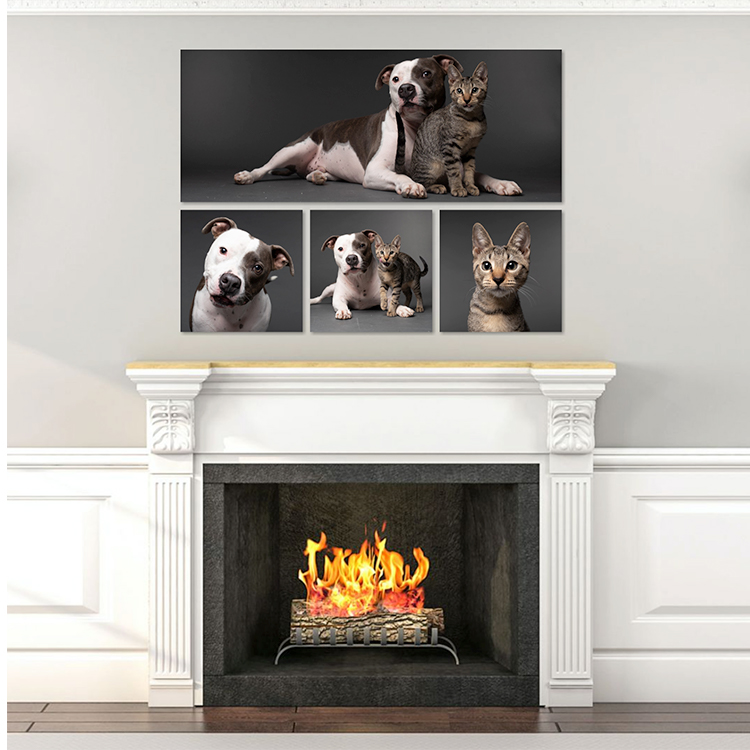 Rigby Collection_AGoldPhoto Pet Photography