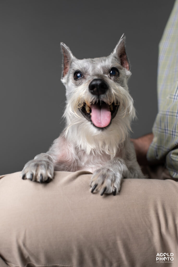 AGoldPhotoPetPhotography-2-6