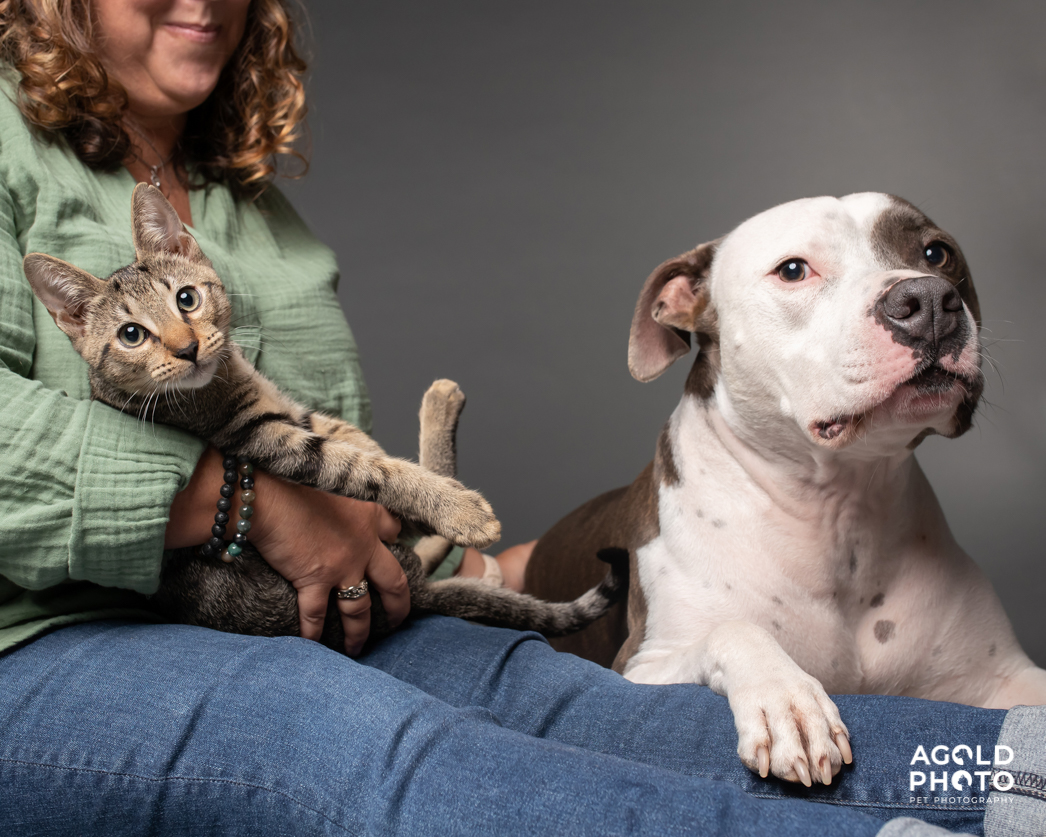 Tampa-Pet-Photography_Cat-and-Dog-2-2