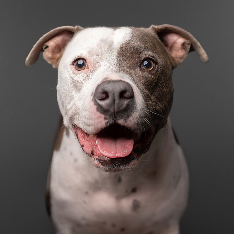 Tampa Pet Photography_Dude Smike