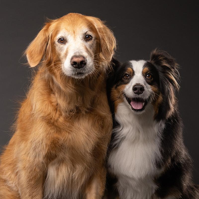 Tampa Pet Photo Studio_Macy and Turk