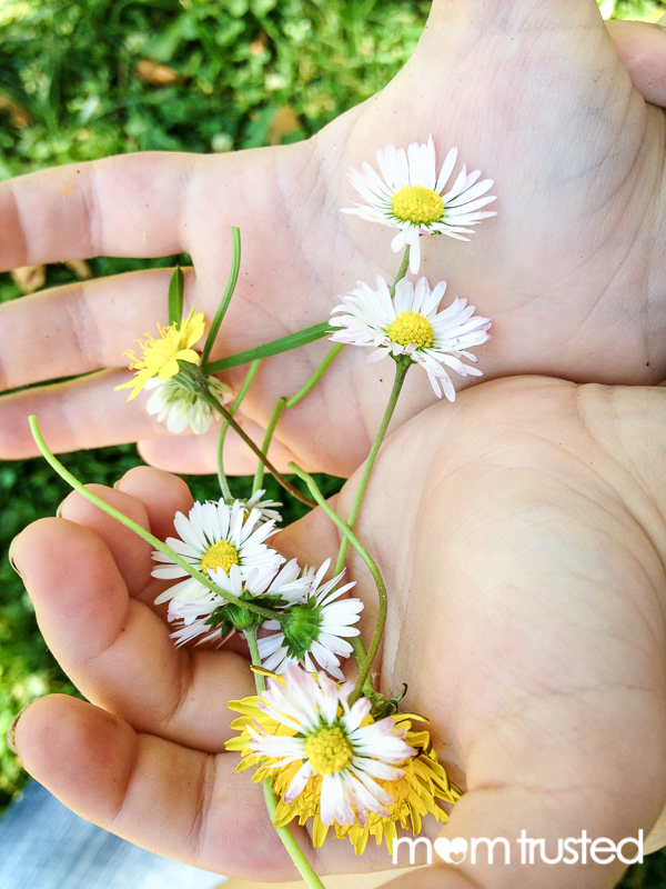 pick flowers with a few inches of stem for a daisy chain