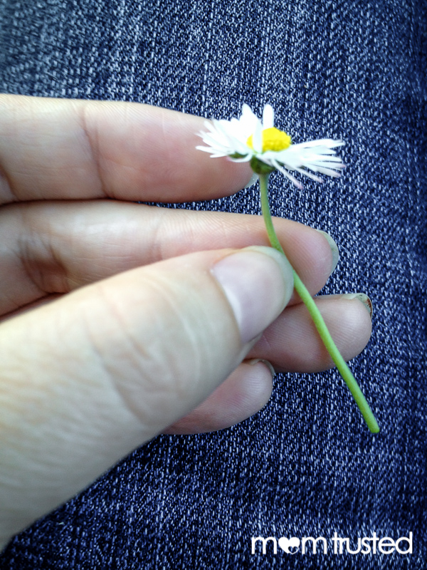 peirce a hole in the stem to start the daisy chain