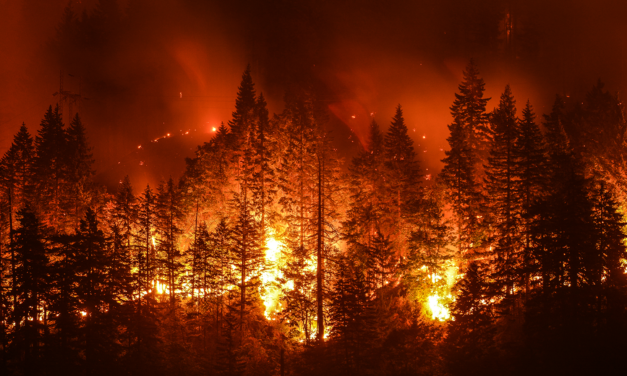 California Wildfire Prevention Needs Rational Solutions