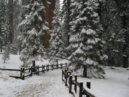 Grant Grove at Kings Canyon National Park