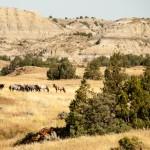 Theodore Roosevelt NP Horses