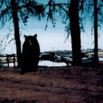 Bear-by-Lake-150x150