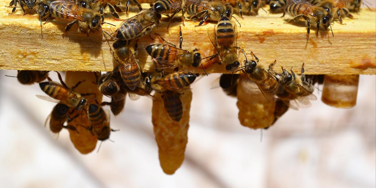 3 apiario