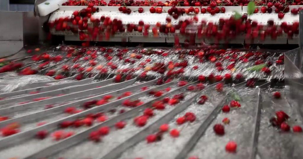 Cherry Export 5