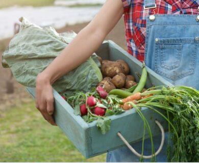farm veggies