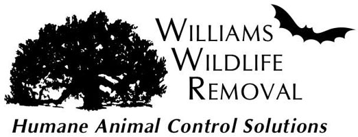 Williams Wildlife Removal