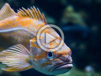 Should You Be Eating Fish? | Meat Your Future