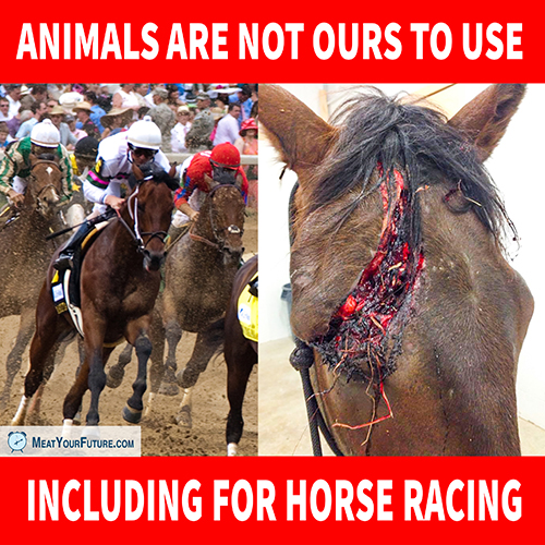 Horse Racing - Animals Are Not Ours to Use   Meat Your Future