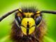 What Happens to Our Food Supply When Pollinators Go Extinct | Meat Your Future