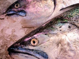 Fish Is Not Healthy | Meat Your Future