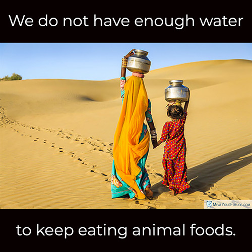 We Do Not Have Enough Water To Keep Eating Animal Foods | Meat Your Future