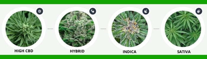 Dr. Strains CBD variety types