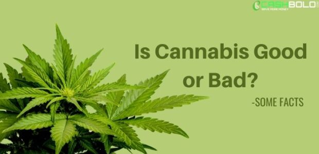 Is Cannabis Good or Bad
