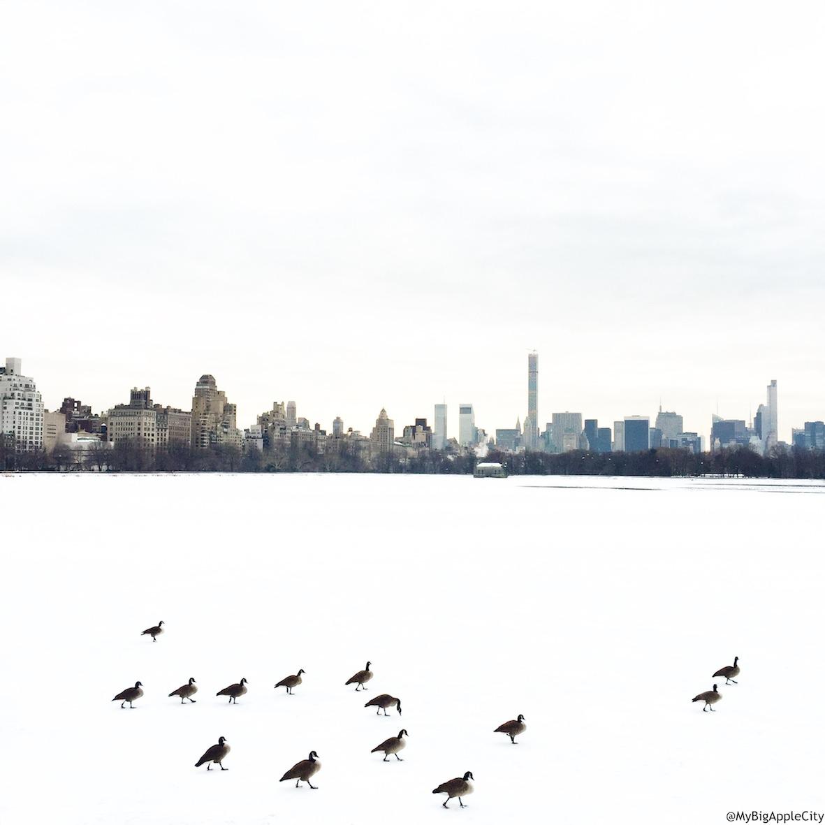 MyBigAppleCity-new-york-blog-travel-centralpark