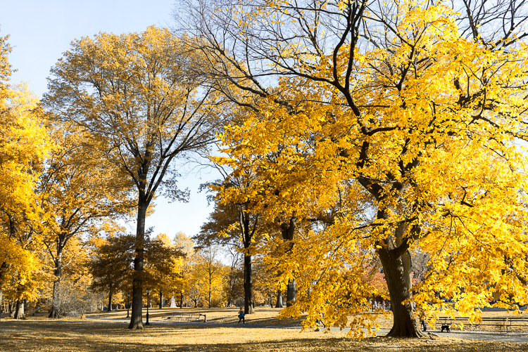 Fall colors 2017 in New York Central Park