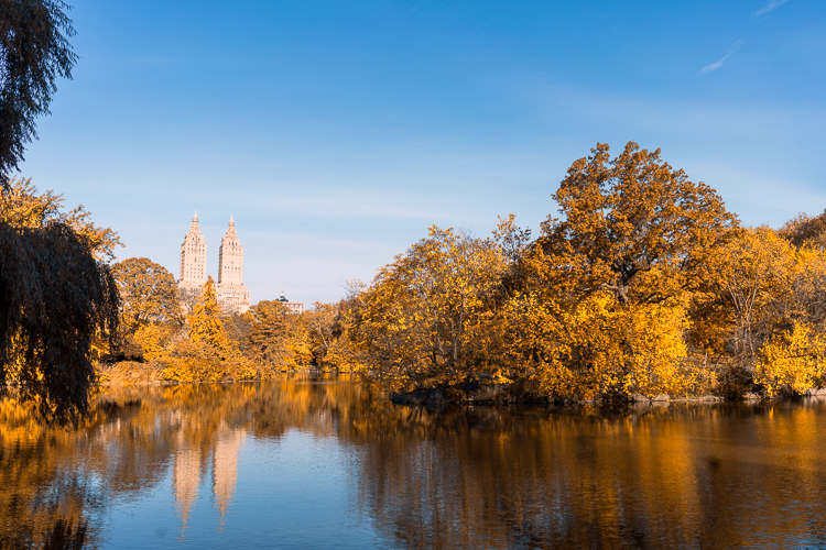 Central Park Fall colors 2017