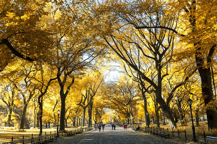 Fall in Central Park Fall colors travel blog mybigapplecity