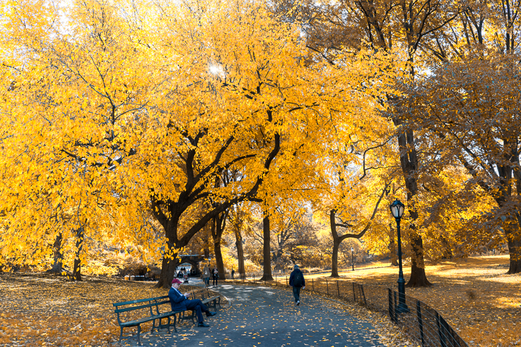 Autmone à Central Park Blog voyage mybigapplecity