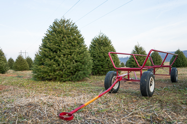 Wyckoff Christmas Tree Farm NJ