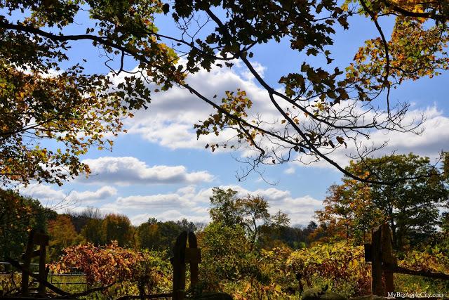 pumpkin-picking-nyc-mybigapplecity-park