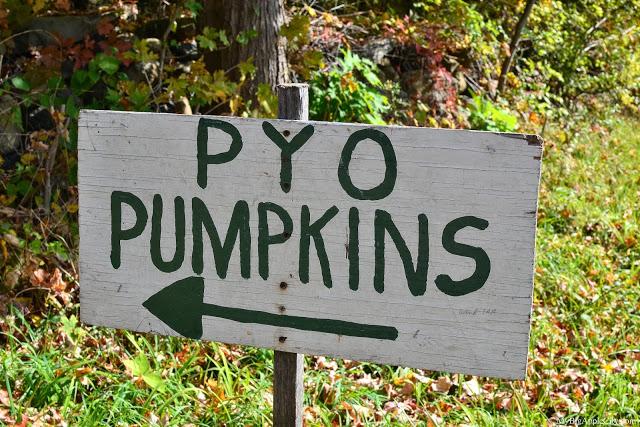 pumpkin-picking-nyc-mybigapplecity-4
