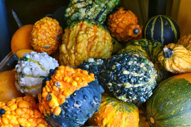 pumpkin-picking-nyc-mybigapplecity-7