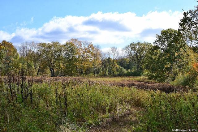 pumpkin-picking-nyc-mybigapplecity-upstate