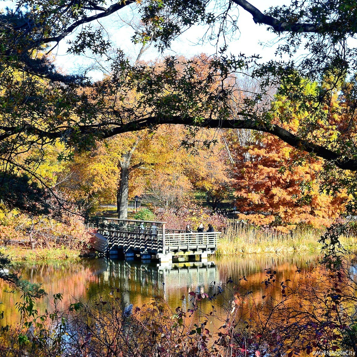 best-central-park-fall-2014