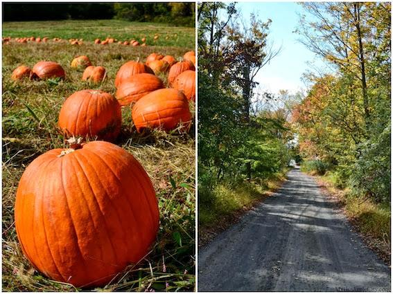 pumpkin-picking-nyc-mybigapplecity-3