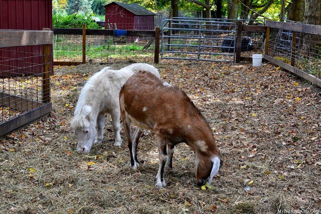 pumpkin-picking-nyc-mybigapplecity-barn-2