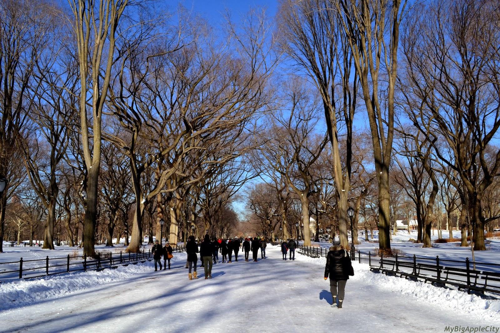 new-york-blog-nyc-polar-vortex-nyc-mybigapplecity