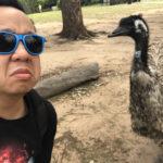 Lone Pine Emu