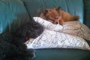 Josie & Callie