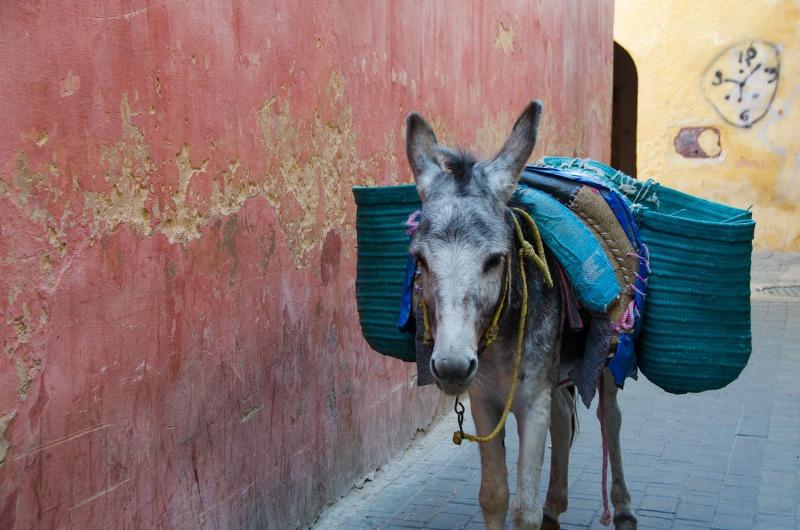 Morocco - Medina of Meknes
