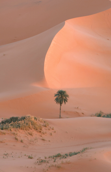 Morocco - Sahara Desert